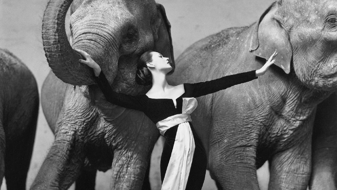 50s fashion photography